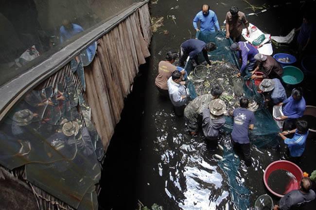 Bắt cá trong siêu thị New World Bangkok