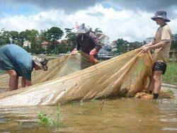 Đánh cá trên hồ Xuân Hương