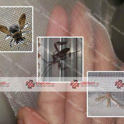 Lưới nhựa chống côn trùng