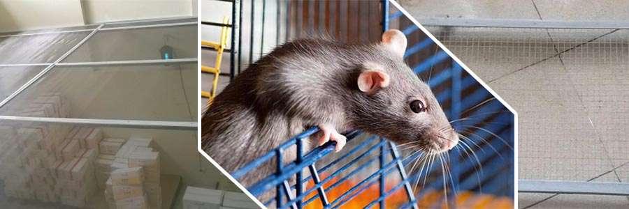 Ứng dụng lưới hàn chống chuột