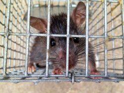Chống chuột bằng lưới kim loại